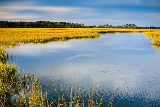 October 22nd image Marsh