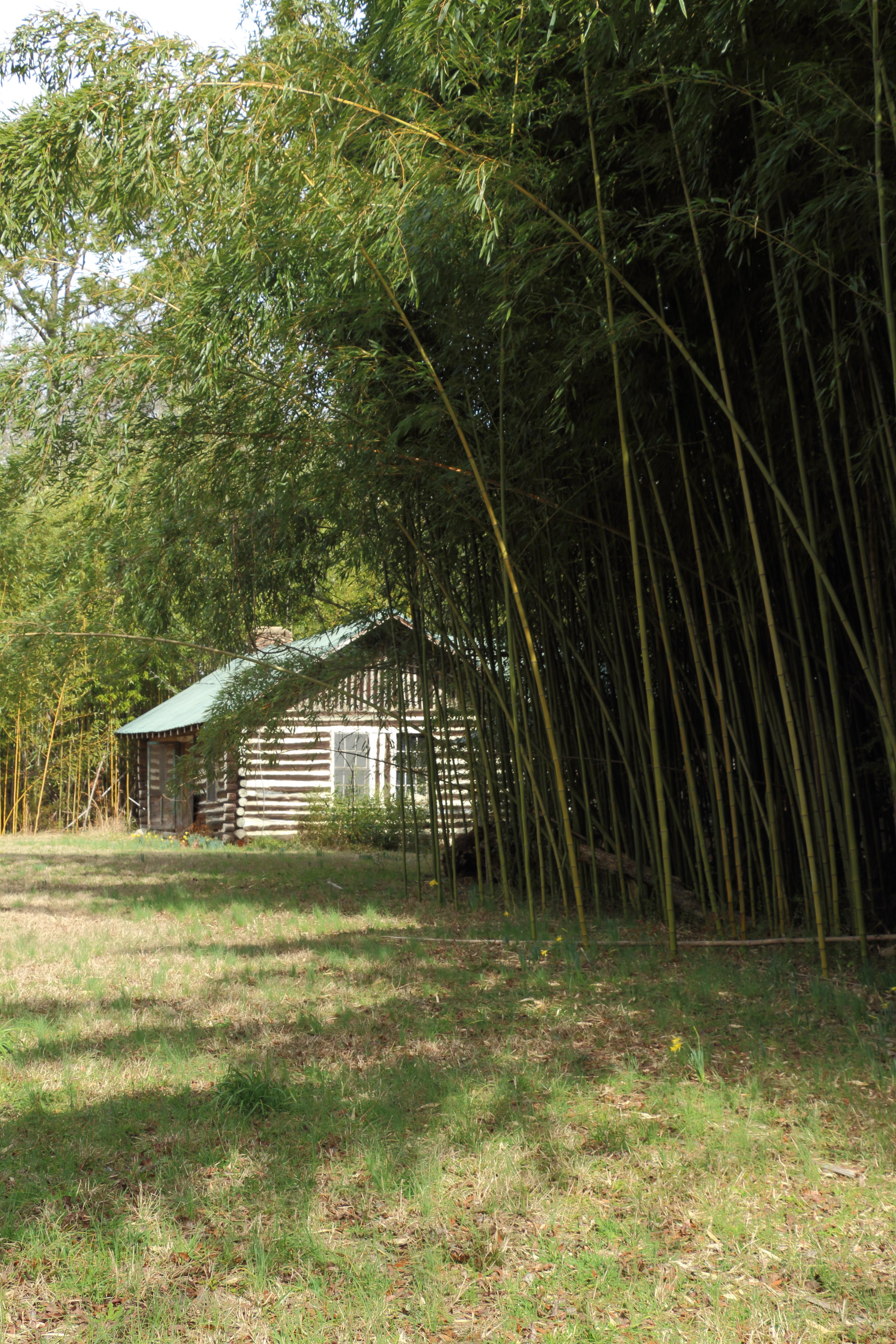 Cabin Bamboo 1